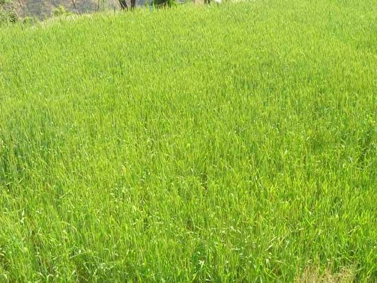 irrigate-land